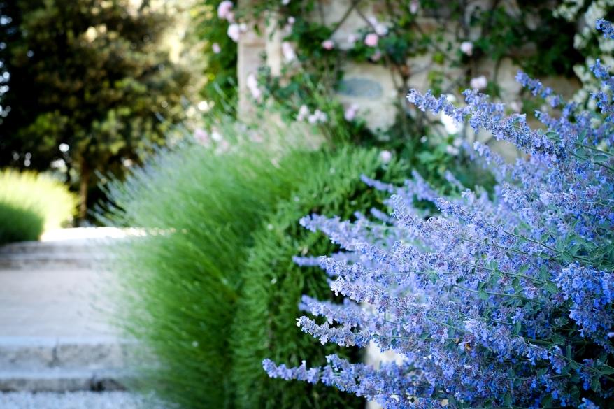 Lavender. Photographer: Helena Bergqvist.