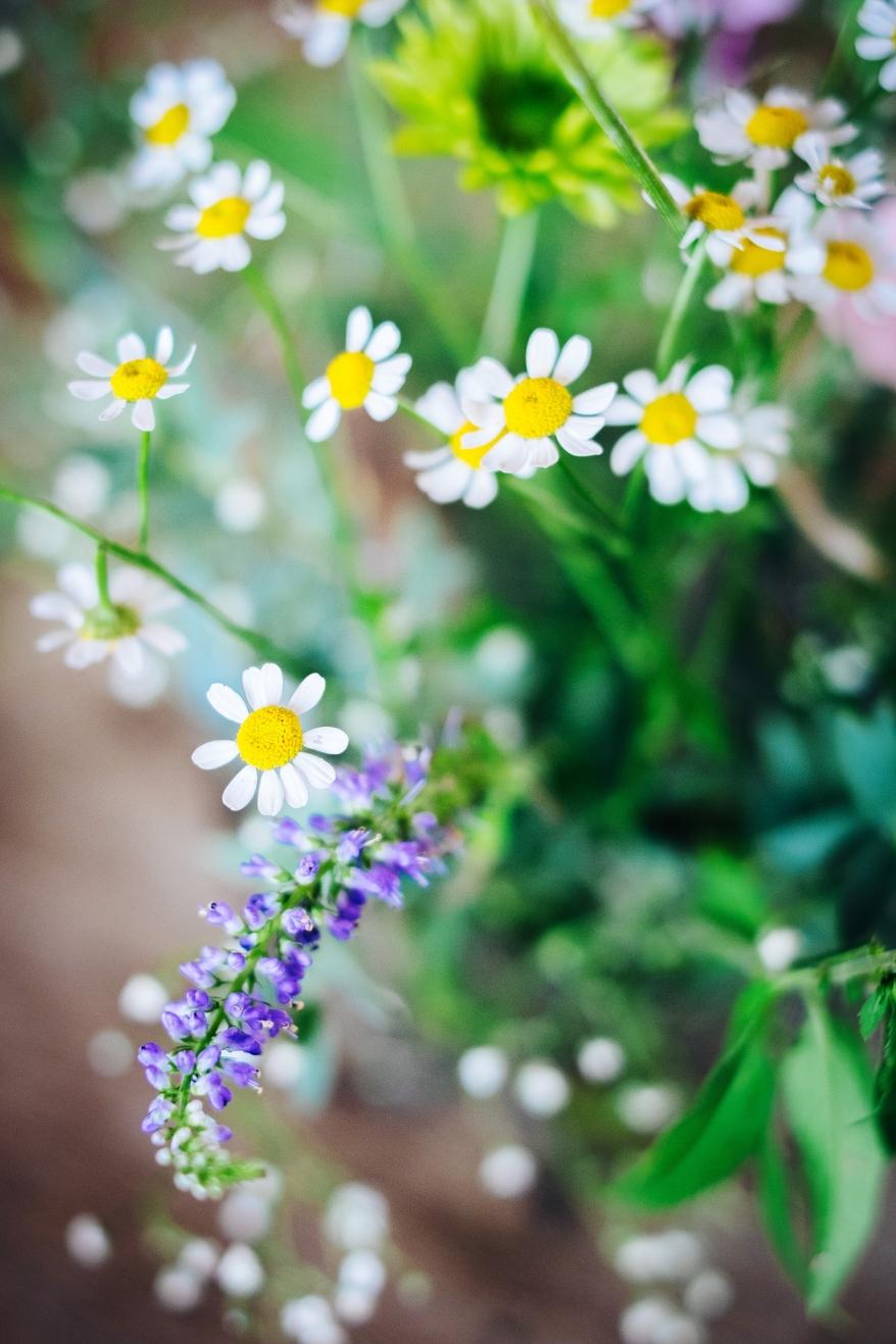 Blommor. Foto.