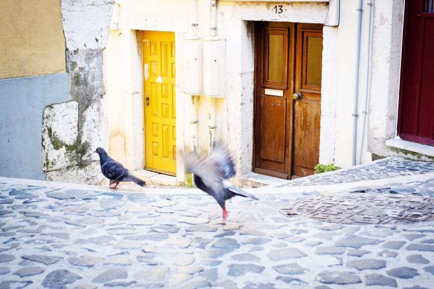 Duvor på gata. Foto.