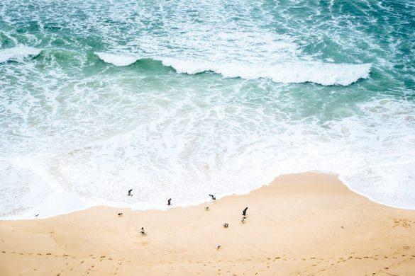 Fiskmåsar på stranden i Portugal