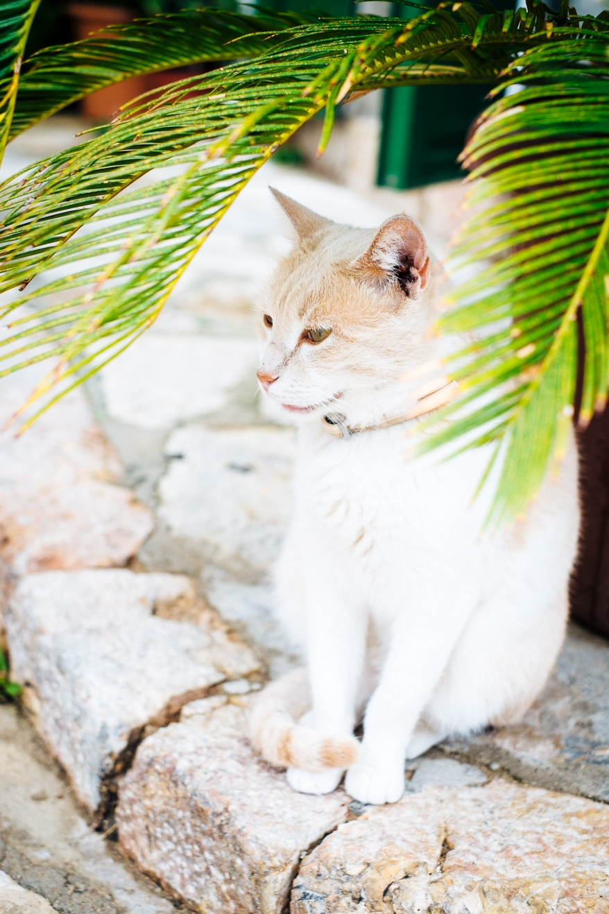 Cat under palm tree. Photographer: Helena Bergqvist.