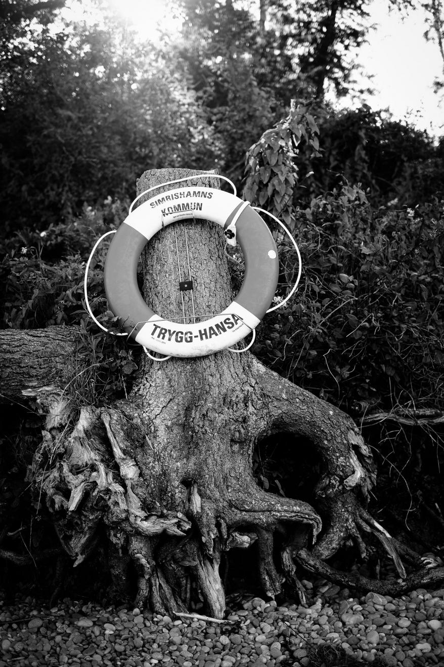 Livboj på träd. Foto.