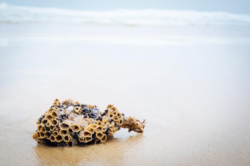 Korall på strand