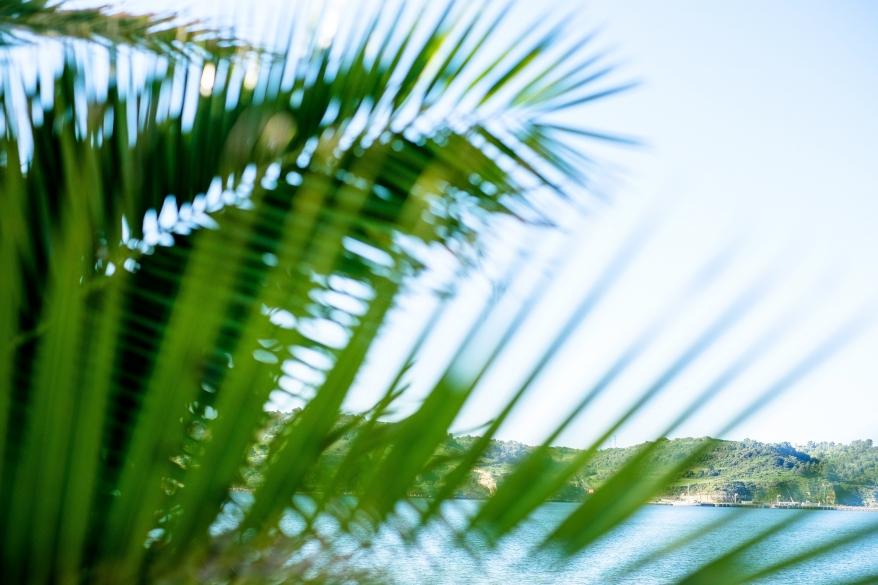 Palmblad. Foto.