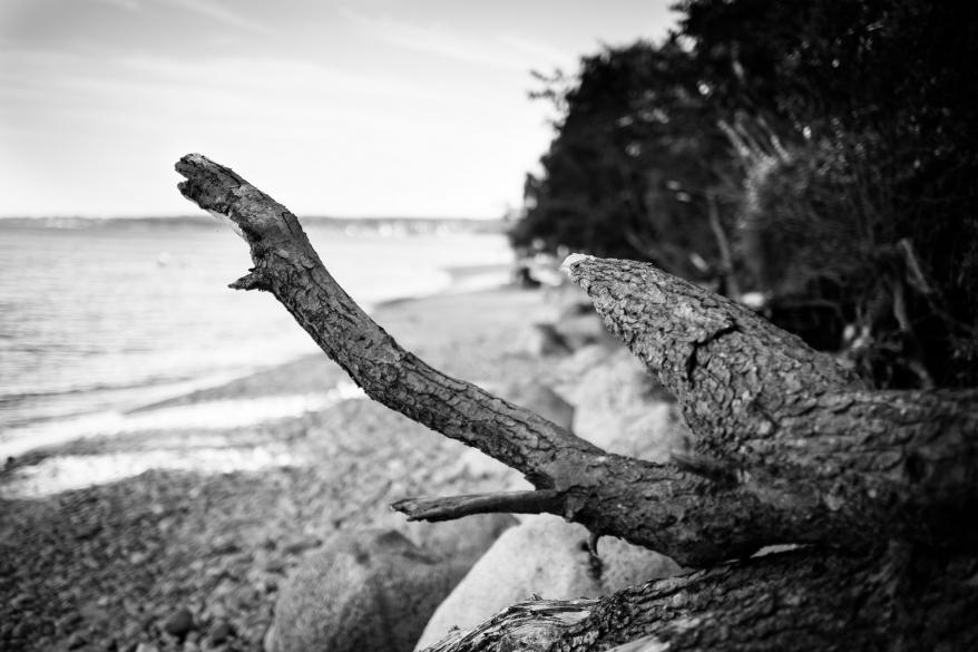 Trädstam på strand. Foto.