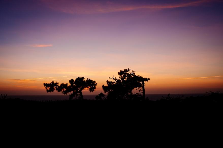 Träd i solnedgång, Portugal