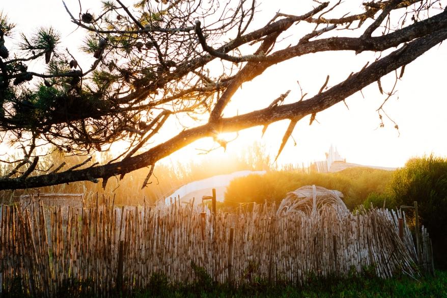 Trädgård i solnedgång, Portugal