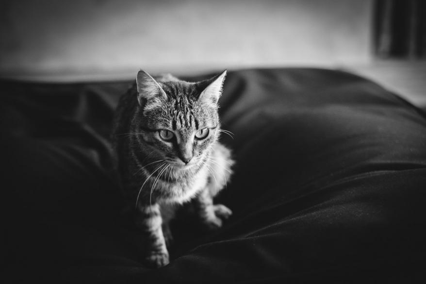 Katt på möbel. Foto.