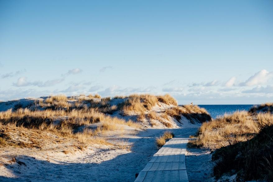 Sanddyn, träspång och hav. Foto.