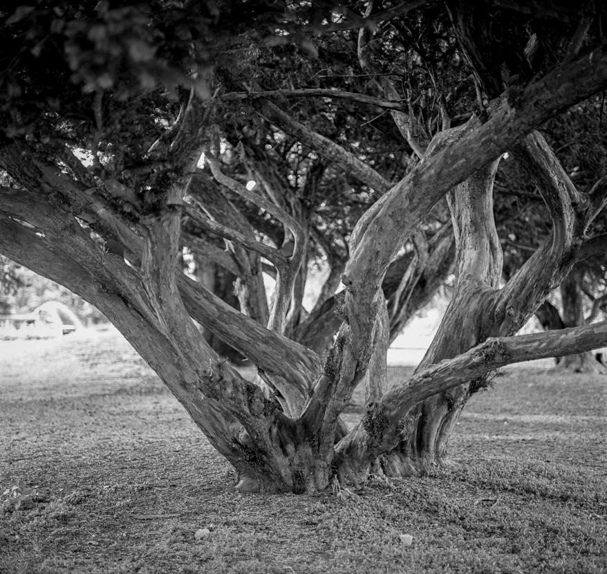 Trees. Photographer: Helena Bergqvist.