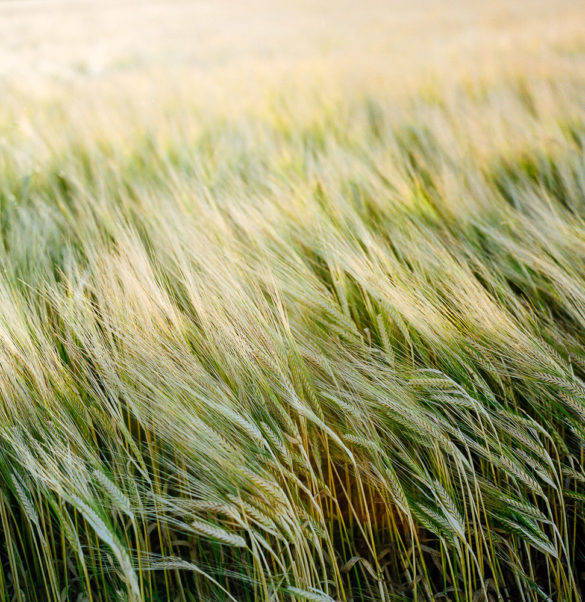 Field. Photographer: Helena Bergqvist.