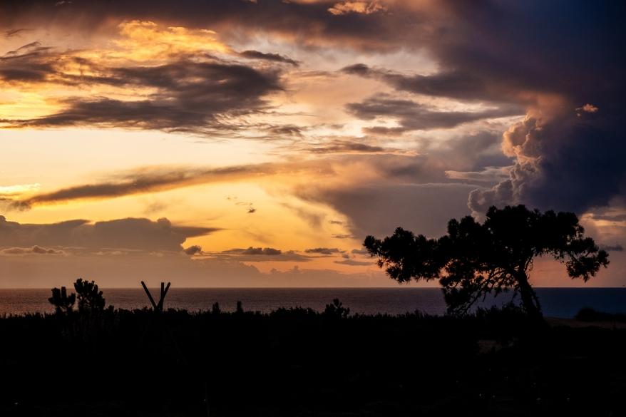 Solnedgång i trädgård. Foto.