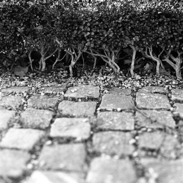 boxwood and cobblestones. Photographer: Helena Bergqvist.