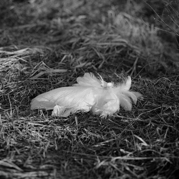 Feathers in grass. Photographer: Helena Bergqvist.