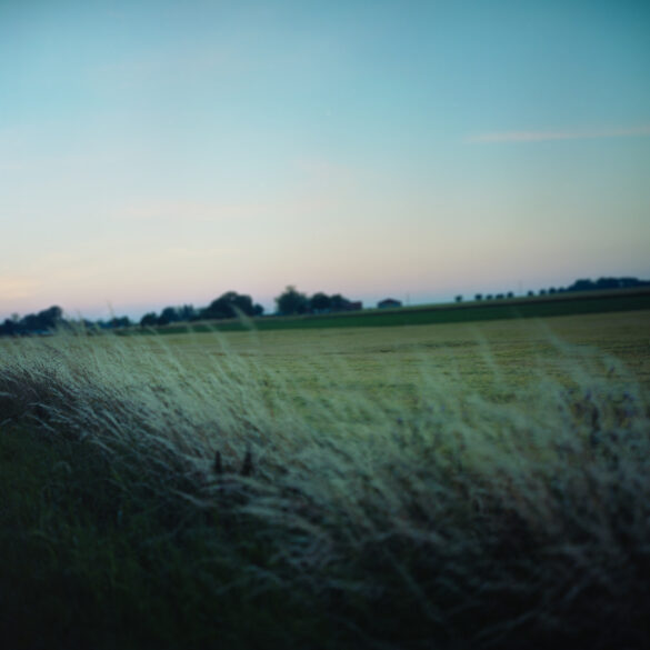 Fields in sunset. Photographer: Helena Bergqvist.