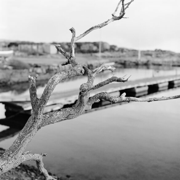 A branch in front of a harbor. Photographer: Helena Bergqvist.